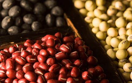 世界農業遺産認定された能登で作る黒豆と能登大納言